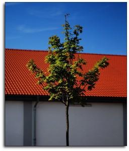 The Obligatory Tree
