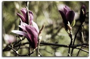 Remember Last Springtime